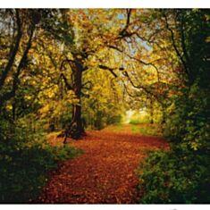 Фотошпалери Komar Осінній ліс 8-068