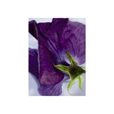 Фотошпалери Komar Квітка фіалка 4-711